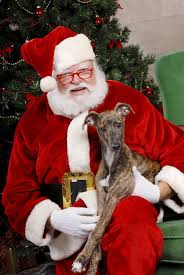 get your 4 legged kid photographed with santa dallas voice