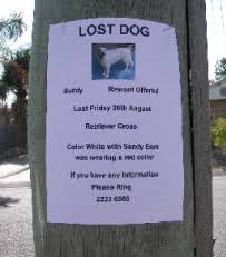 how to find a lost dog or puppy