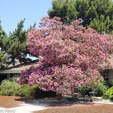 crape myrtle cottage garden inland valley garden planner