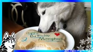 birthday cakes for dogs how to make a dog birthday cake easy recipe diy snacks with the