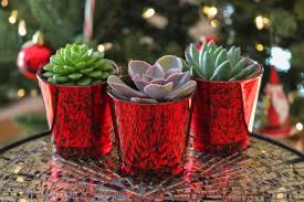 pots for succulents for sale red trio say it with succulents succulents for sale bulk