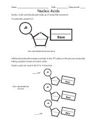 dna and rna worksheet by activelearning teachers pay teachers