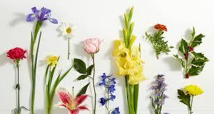 online florists the best online florists in patna quora
