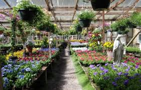 6 nurseries to discover in san francisco and around lostinsf