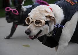 annual haute dog howl u0027oween parade in california