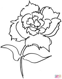dianthus flower coloring page free printable coloring pages