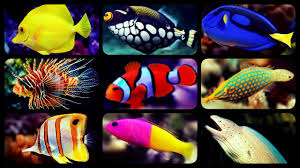 types of aquarium types of saltwater aquarium fish coral reef tank fish sharks