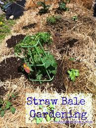 naturally frugal straw bale gardening in god u0027s economy