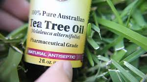tea tree oil for a bad nail youtube