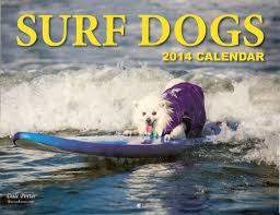 american eskimo dog calendar ziggy so cal surf dogs