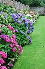 the 25 best garden borders ideas on pinterest flower bed