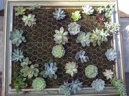 indoor living wall planters hanging wall garden 14147 write teens