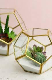 succulents u0026 cactus