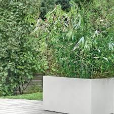 abri jardin bambou tous nos bambous plantes et jardins