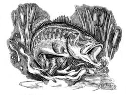 file illustration drawing of largemouth bass micropterus salmoides