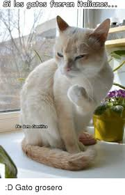 imagenes groseras de gatos si los fueron iitalianos gatos o o fb8 gato cientifico d gato
