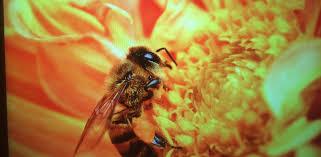 parkten lanes beekeepers association u2013