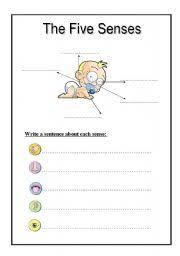 english teaching worksheets the five senses