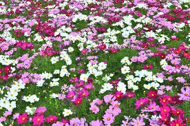 imagenes de jardines pequeños con flores las mejores imágenes de jardines con flores estan aqui imágenes de