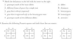 Dihybrid Cross Punnett Square Worksheet Popular Punnett Square Dihybrid Cross Worksheet Free To Print Pdf