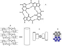 the role of surface energy in guanosine nucleotide alignment an