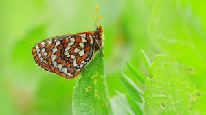 lies and butterflies how to save a butterfly nature pbs