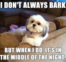 Dog Barking Meme - dog barking meme the how to dog blog