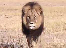 ashley benson apologizes for controversial cecil the lion costume