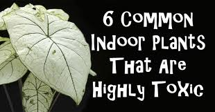 6 common indoor plants that are highly toxic david avocado wolfe