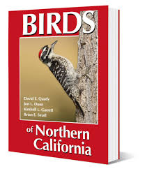 golden gate audubon societybirds of northern california new