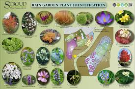 native plants list rain garden plants stroud water research center