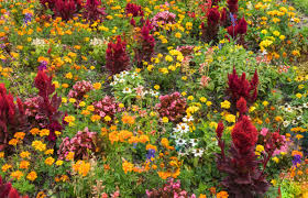 Landscape Flower Garden by Free Images Nature Grass Blossom Field Meadow Leaf Petal