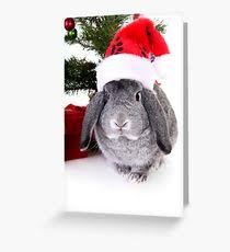 rabbit greeting cards redbubble
