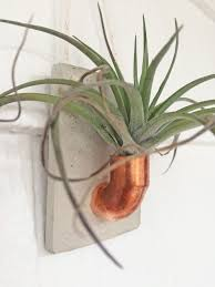 small planter copper and concrete wall planter air plant holder