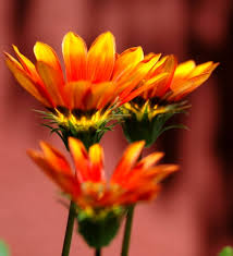 autumn flowers how to add autumn flowers to your home flower pressflower press