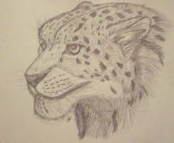 snow leopard face sketch by firekougra15 on deviantart