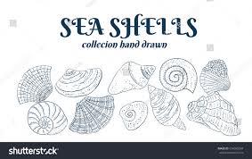 set seashells hand drawn collection dark stock vector 614095094