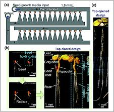 microfabricated tools for quantitative plant biology analyst