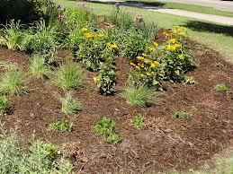 native plants for rain gardens lincoln ne gov watershed management u003e rain gardens