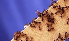 de fourmis dans la cuisine top 10 des ères cruelles de buter des fourmis elles ne
