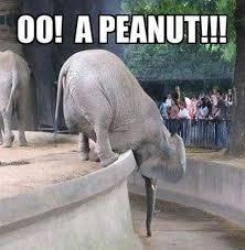 Elephant Meme - funny elephant meme