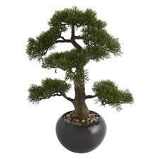 best 25 buy bonsai tree ideas on bonsai tree price
