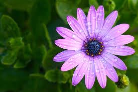 purple flower purple flower 1 719438 ram dass 2018
