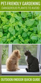 best 25 dog friendly garden ideas on pinterest cat garden cat