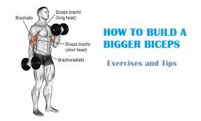 muscle palace biceps