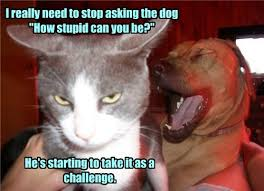 Stupid Animal Memes - i has a hotdog stupid funny dog pictures dog memes puppy