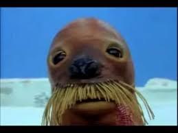 Walrus Meme - deluxe walrus meme giant walrus villains wiki villains bad guys ic