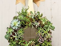 Low Light Succulents by How To Care For Succulents Southern Living