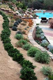 what to plant on a slope hill landscape design slope