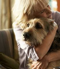 How To Comfort A Friend What To Say When A Pet Dies How To Comfort A Friend Who Lost A Pet